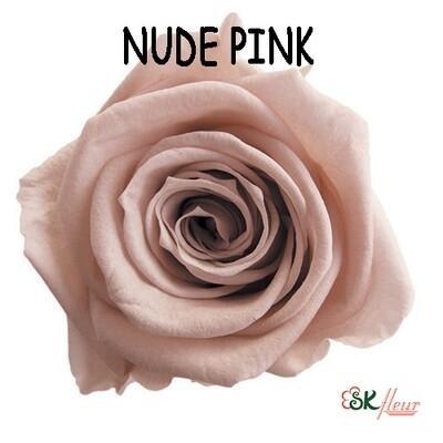 Mediana Rose / Nude Pink