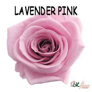Mediana Rose / Lavender Pink