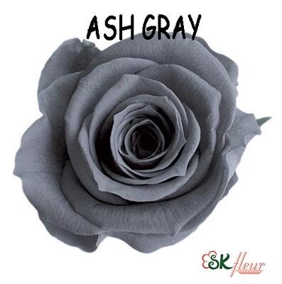 Mediana Rose / Ash Gray