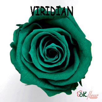 Mediana Rose / Viridian