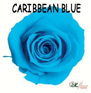 Mediana Rose / Caribbean Blue