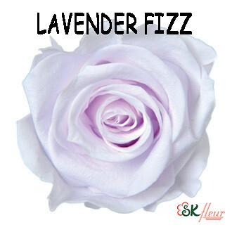 Mediana Rose / Lavender Fizz