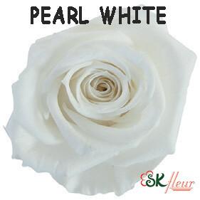Spray Rose / Pearl White