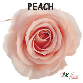 Spray Rose / Peach