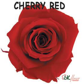 Spray Rose / Cherry Red