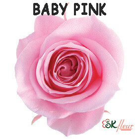 Spray Rose / Baby Pink
