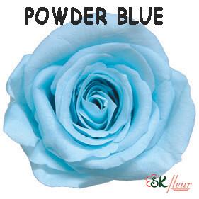 Spray Rose / Powder Blue