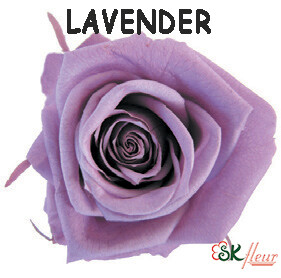 Spray Rose / Lavender