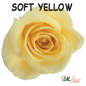 Spray Rose / Soft Yellow