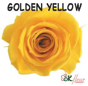 Spray Rose / Golden Yellow