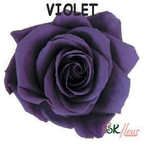 Spray Rose / Violet