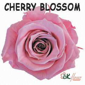 Spray Rose / Cherry Blossom