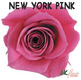 Spray Rose / New York Pink