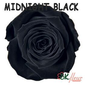 Spray Rose / Midnight Black