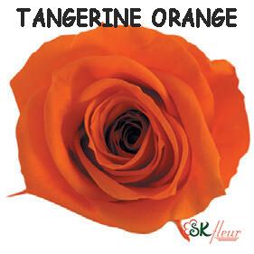 Spray Rose / Tangerine Orange