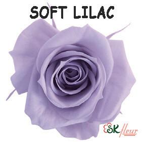 Spray Rose / Soft Lilac