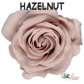 Spray Rose / Hazelnut