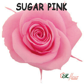 Spray Rose / Sugar Pink