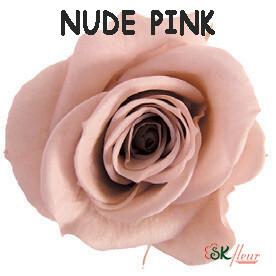 Spray Rose / Nude Pink