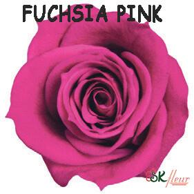 Spray Rose / Fuchsia Pink