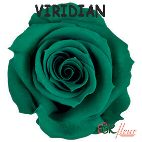 Spray Rose / Viridian