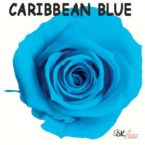 Spray Rose / Caribbean Blue