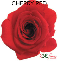 Mediana Short Rose / Cherry Red