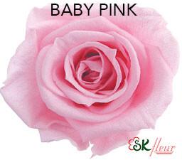 Mediana Short Rose / Baby Pink