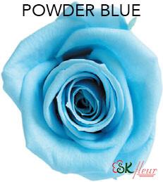 Mediana Short Rose / Powder Blue