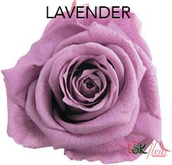 Mediana Short Rose / Lavender