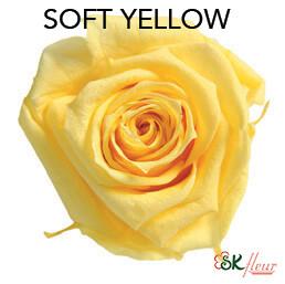 Mediana Short Rose / Soft Yellow