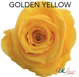 Mediana Short Rose / Golden Yellow