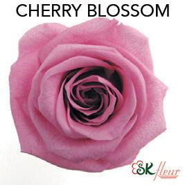 Mediana Short Rose / Cherry Blossom