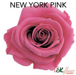 Mediana Short Rose / New York Pink