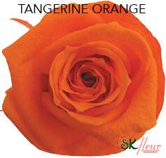 Mediana Short Rose / Tangerine Orange