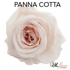 Mediana Short Rose / Panna Cotta