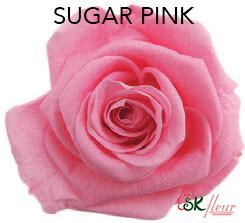 Mediana Short Rose / Sugar Pink
