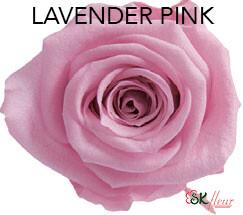 Mediana Short Rose / Lavender Pink