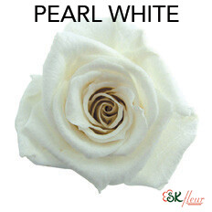 Baby Rose / Pearl White