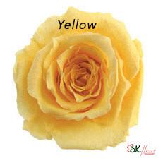 Baby Rose / Yellow