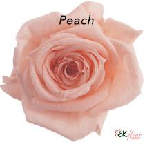 Baby Rose / Peach