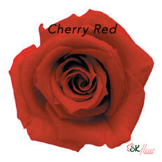 Baby Rose / Cherry Red