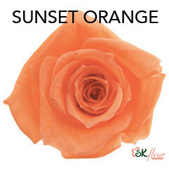Baby Rose / Sunset Orange