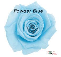 Baby Rose / Powder Blue