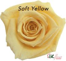 Baby Rose / Soft Yellow