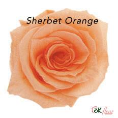 Baby Rose / Sherbet Orange