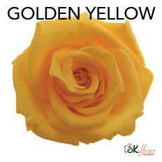 Baby Rose / Golden Yellow