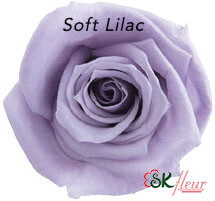 Baby Rose / Soft Lilac