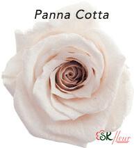 Baby Rose / Panna Cotta