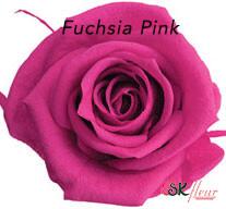 Baby Rose / Fuchsia Pink